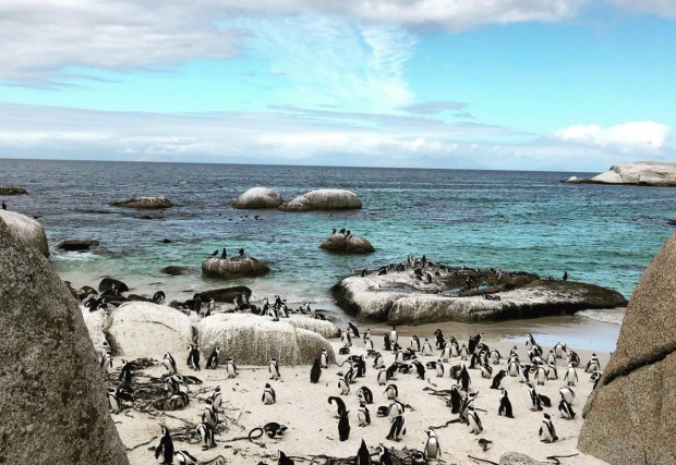 Boulders Beach Penguins Simon's Town Guide